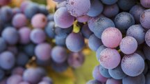 Pinot Noir Day: 3 labels that will persuade you not to drink anything else