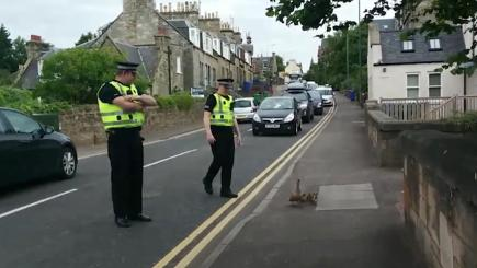 Mother duck and her ducklings get police escort