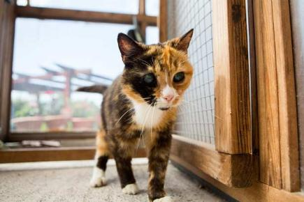 Britain S Oldest Rescue Cat Can T Find A Home Because She