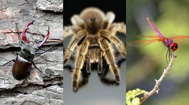 Quiz: Can you identify these insect babies? - BT