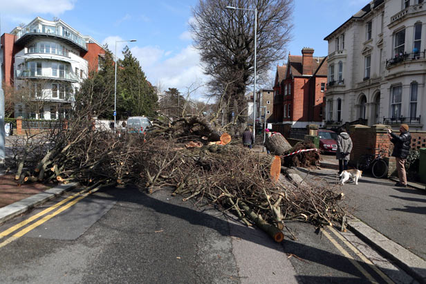 A fallen tree in Brighton, Sussex as storm Katie hits the UK