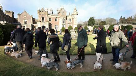 Rare terriers return to their ancestral home