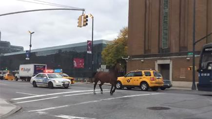 Runaway horse sparks police chase