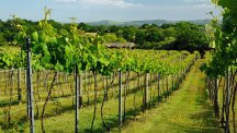 Sales of English wines are booming – here are 6 reasons to drink more of it this summer