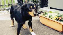 A male collie cross found at the summit of Scafell Pike has been reunited with his owner
