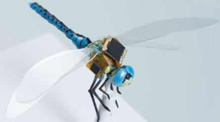 Scientists are fitting dragonflies with tiny mind-controlling backpacks