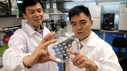 Scientists develop a skin patch that could help reduce 'bulging tummy' fats