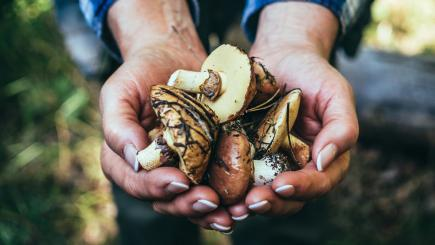 Scientists have found mushrooms have a surprising health benefit