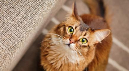 Ancient DNA Shows That Cats Domesticated Themselves