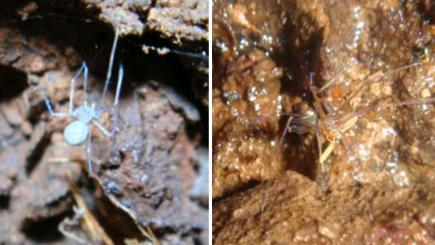 Scientists put literary spin on names for seven newly-discovered spider species