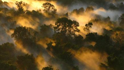 The Amazon rainforest is the world's largest