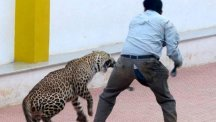 Screengrab of leopard attack at Indian school
