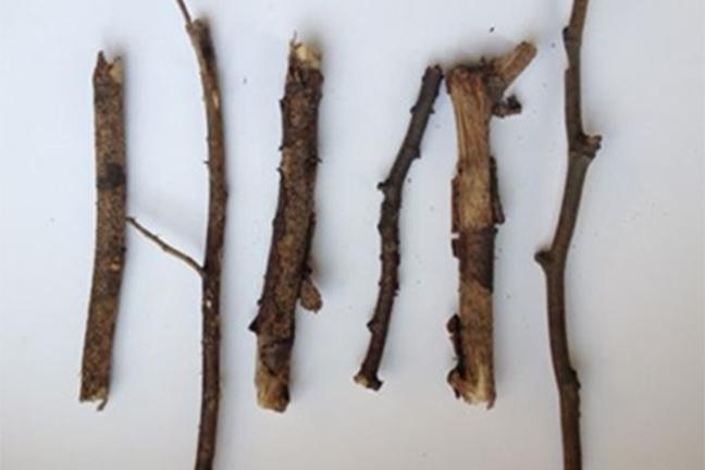Screengrab of the six twigs for sale on eBay