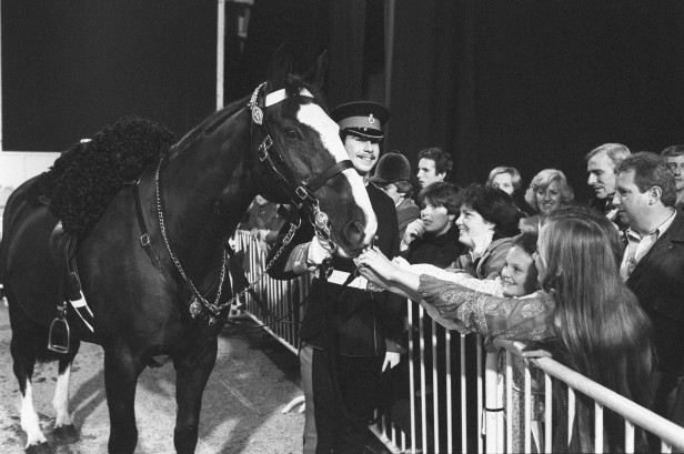 Sefton, who recovered from severe injury caused by the Hyde Park bomb, with his rider Michael Pedersen at the 1982 Horse of the Year Show.
