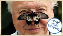 Sir David Attenborough with a butterfly on his nose - The story behind the photo