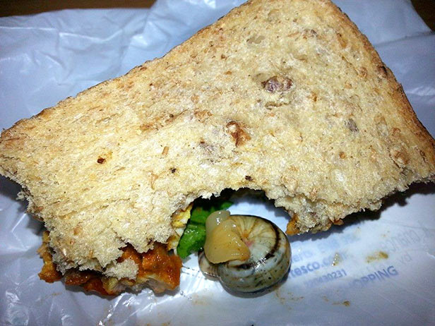 The live snail found in Hannah Scott's Tesco chicken tikka sandwich.