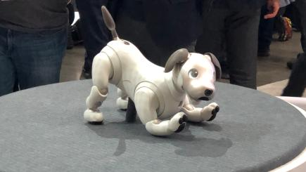 Sony's robotic dog Aibo might have already won CES