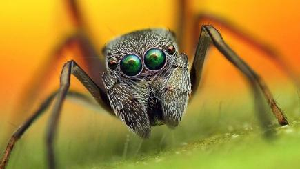 Close-up spider portraits show beauty of nature