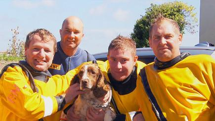 Dog rescued after a week at sea