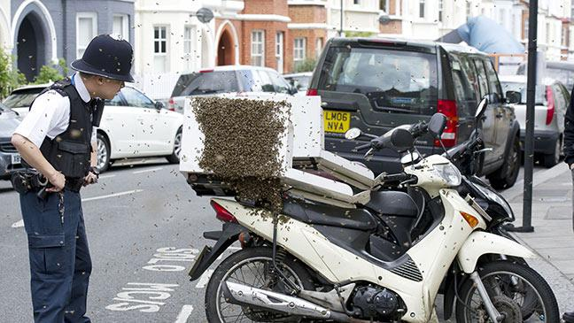 police come to the rescue as swarm of bees attacks pizza delivery
