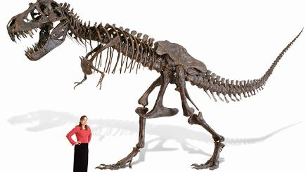T-Rex skeleton replica goes on sale