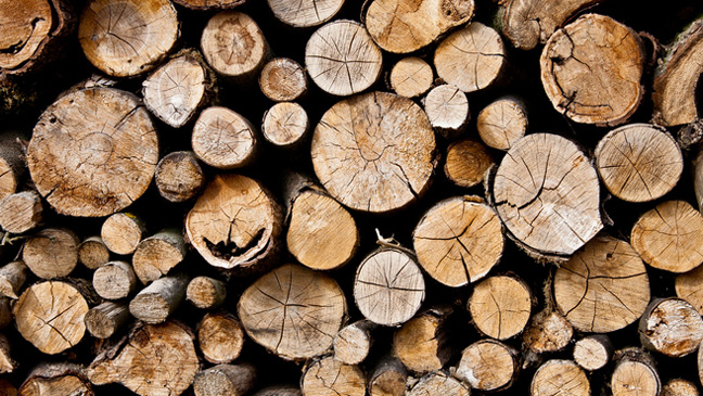 most expensive mobile home with Firewood What Are The Rules On Taking Fallen Wood 11364163381986 on Santa Cat Pictures furthermore Wynne likewise Samsung Galaxy J7 2017 id10394 furthermore Beautiful Dolls Wallpaper likewise Sterling Bale Ronaldo More The Most Expensive Transfers In.
