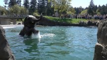 This elephant wasted no time enjoying the sunshine with a pool party of its own