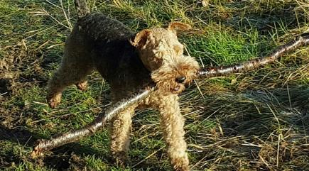 This is why you shouldn't throw sticks for your dog