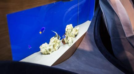 This new Italian supercar comes with its own built-in aquarium