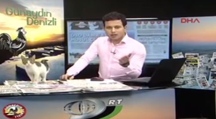 Breaking 'mews?' Stray cat interrupts live TV show in Turkey