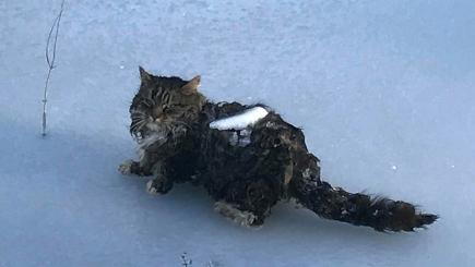 This poor cat was found stuck to a frozen lake | BT