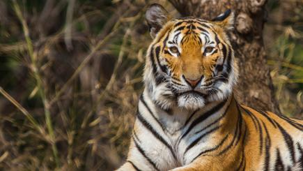 Tinder swipes left on those lame tiger selfies
