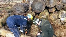 Two firefighters rescuing Bernie the seven-year-old terrier after he got stuck in a wood stack (Hampshire Fire and Rescue Service/PA)