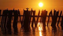 Cormorants make the most of hot September weather on a pier at North Shields Fish Quay