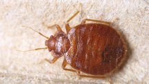 Useful tips on how to tackle head lice, bed bugs and fleas