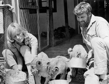 Virginia McKenna and Bill Travers in 1964 with the three lion cubs who appeared in the opening scene of Born Free