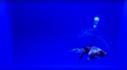 Watch an invisible robot claw grab an unsuspecting fish