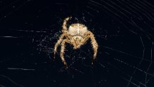 Web users will be able to identify spiders with a new app