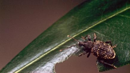 What bugs could be invading your greenhouse?