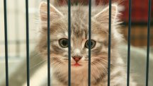 What to think about before rehoming an animal
