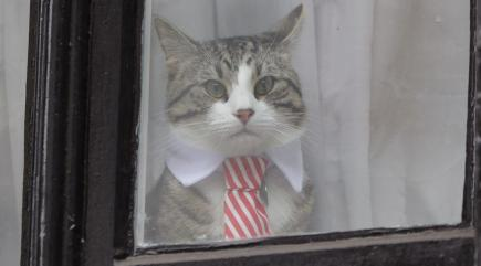 What we know about Julian Assange's cat