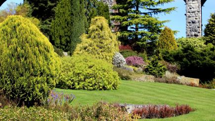What's the best evergreen for you in National Conifer Week?