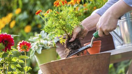 Who knew gardening could be so dangerous? 7 horticultural health hazards