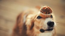 Dog with a cake on his head