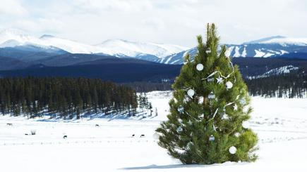 Stock image of a Christmas tree on a snowy hillside.
