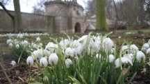 Winter walks: the top 10 places to see snowdrops in the UK