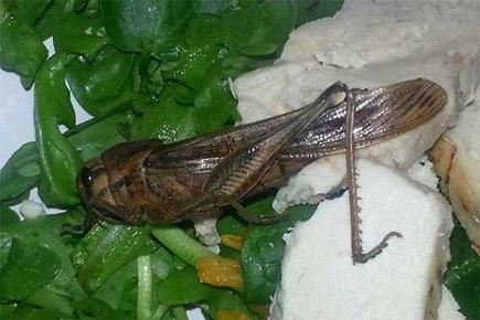 Woman finds locust in Waitrose salad