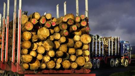 The report warned key suppliers have only a few years of available timber forest left or are 'running at a deficit'