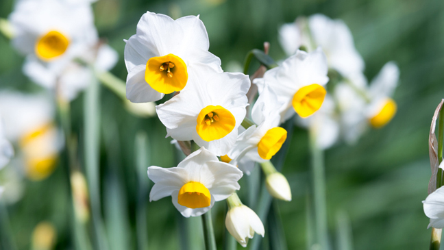 Your Ultimate Flower Calendar The Best Time Of Year To Plant Garden