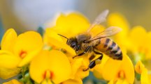 6 of the best bee friendly wildlife havens across the UK
